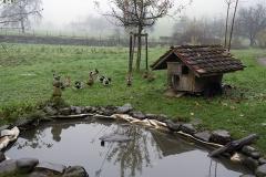 Estanque de patos al lado del huerto, para hacer el control de babosas y caracoles y proveer carne y huevos