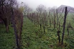 Parte de la producción de uva para vino. Justo al lado de la casa de las abejas.