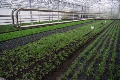 granja-biodinamica16