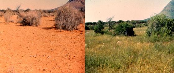 Agricultura regenerativa en Namibia