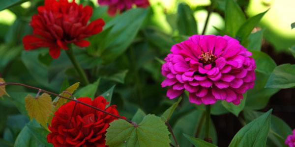 Curso de flores y plantas aromáticas y medicinales