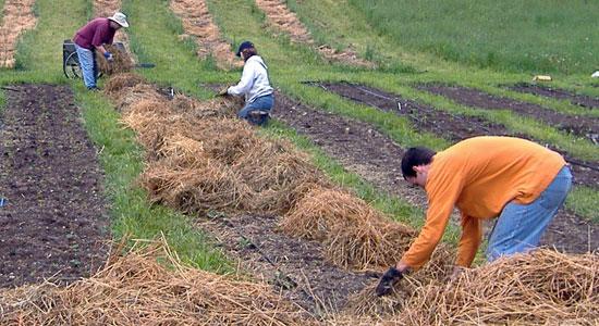 No ares la tierra sergicaballero - Preparacion de la tierra para sembrar ...