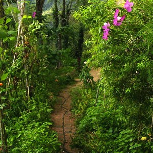 Consejos para el huerto sergicaballero for Asociacion de plantas en el huerto