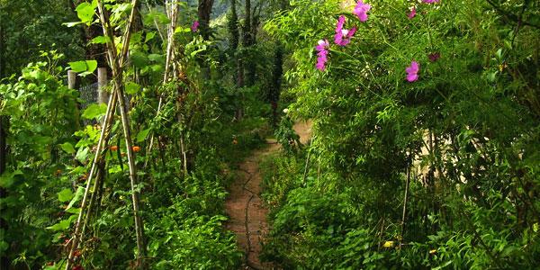 Asociaci n de cultivos y hortalizas Asociaciones de cultivos favorables