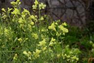 semillas-de-transicion