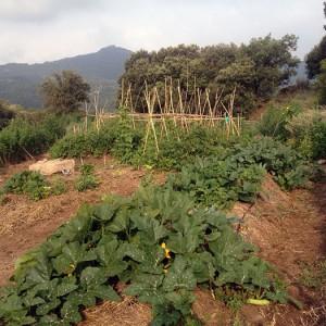 hort-permacultura