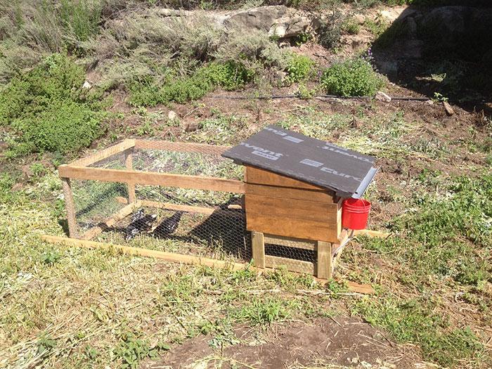 tractor de pollos