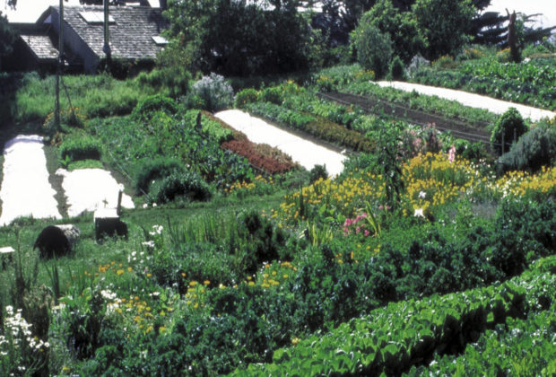 huerta-productiva-permacultura